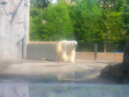 地下のドームから撮影した白熊