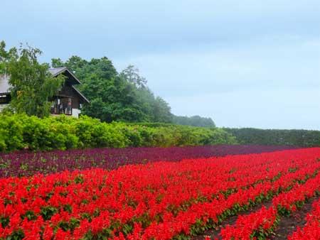 カラフルなお花畑